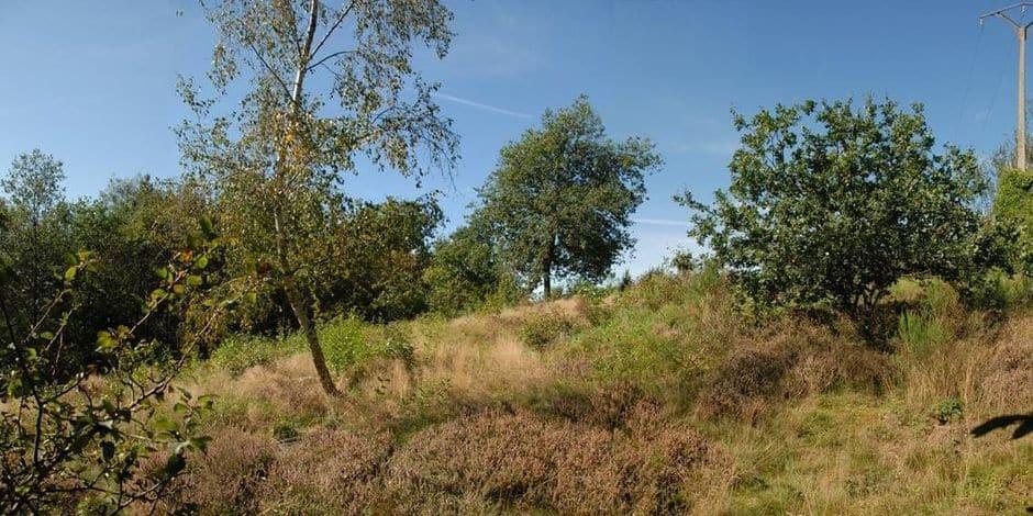 Verviers : réunion d'information sur la Lande du chaîneux à Stembert