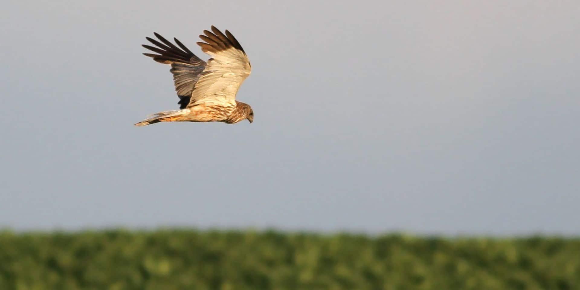 Natagora et Plaine de Vie introduisent un sixième recours contre le parc éolien à la plaine de Boneffe