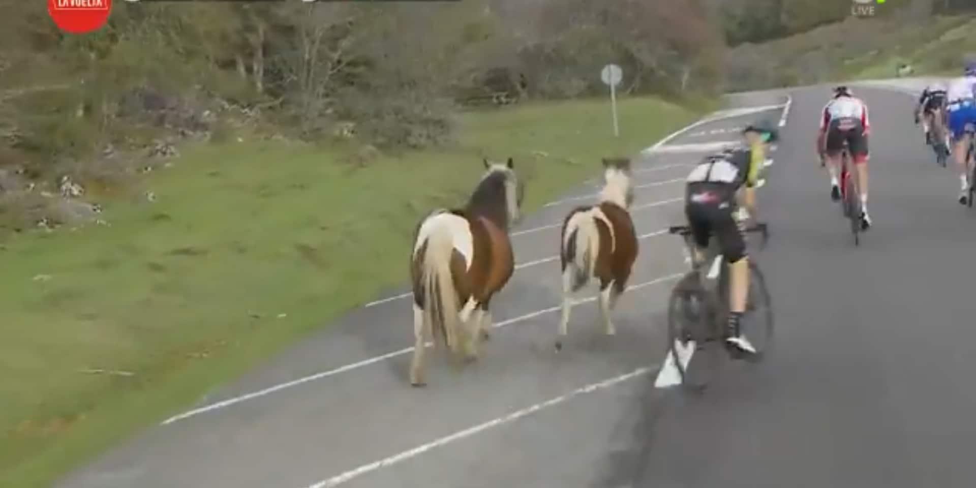Le final de la 2e étape de la Vuelta perturbé par... des poneys (VIDEO)
