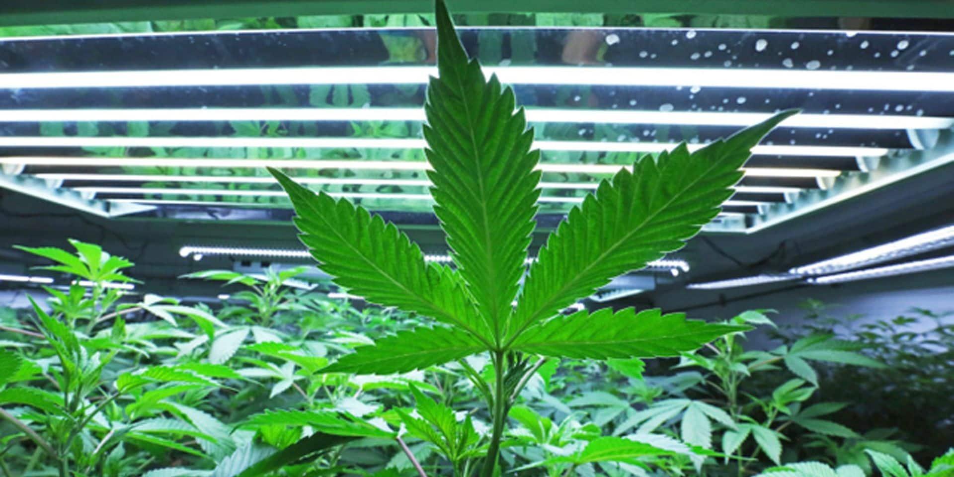 """Trente mois de prison ferme pour """"le spécialiste"""" des cultures de cannabis"""