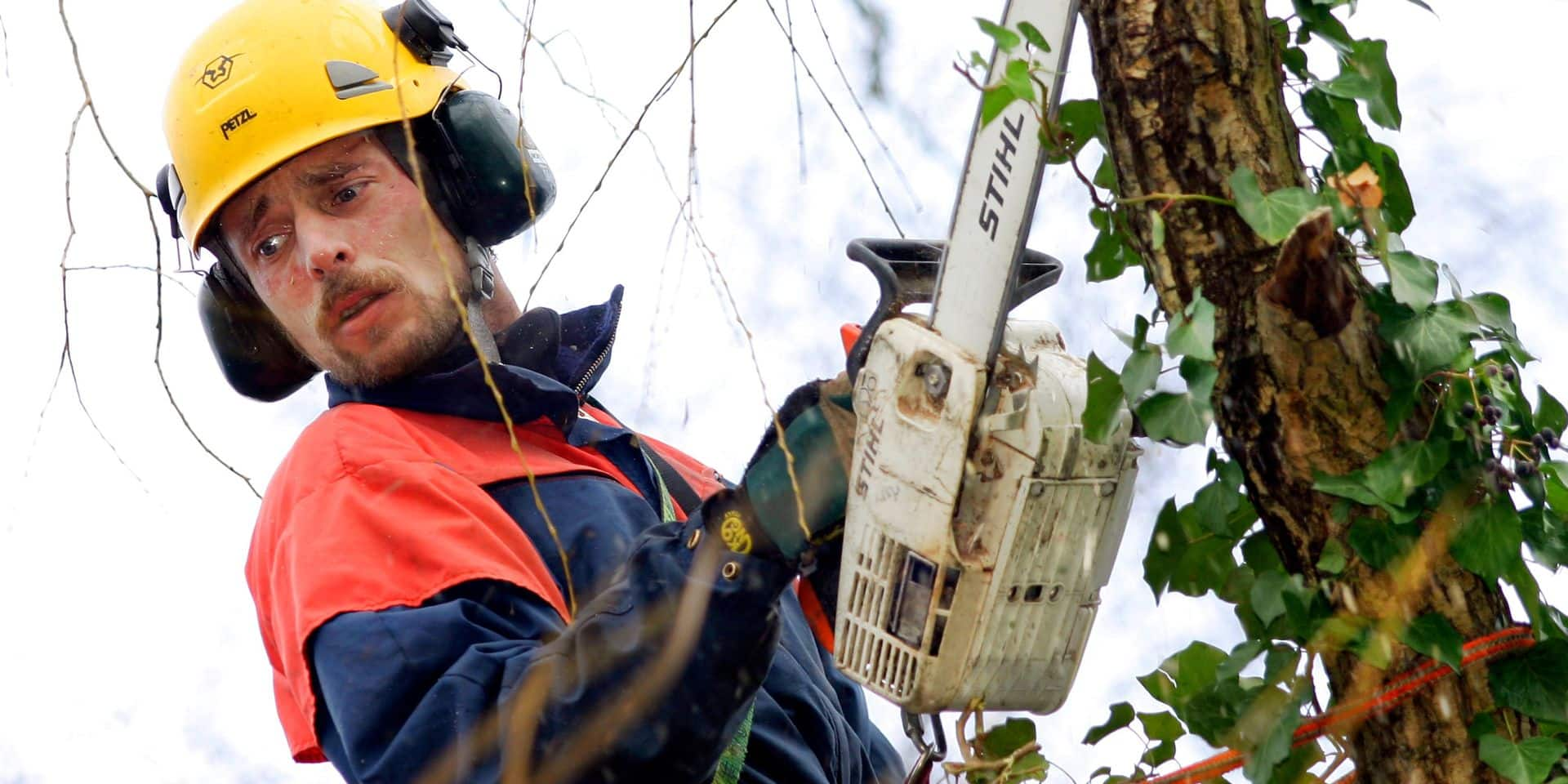 Tree Surgery. Tree sugeon using a chain to trim the branches of a tree.