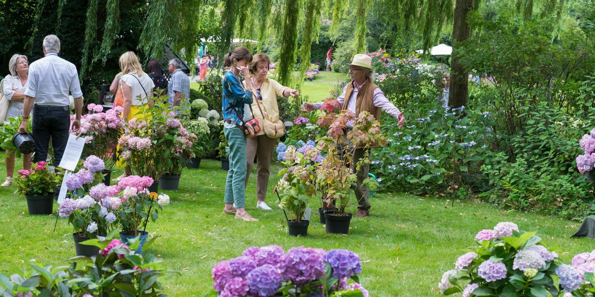 Celles: la 5ème édition de Hortensias en fête se tiendra le 21 juillet
