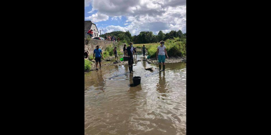 Hotton : un bras de l'Ourthe à sec, des milliers de poissons sauvés