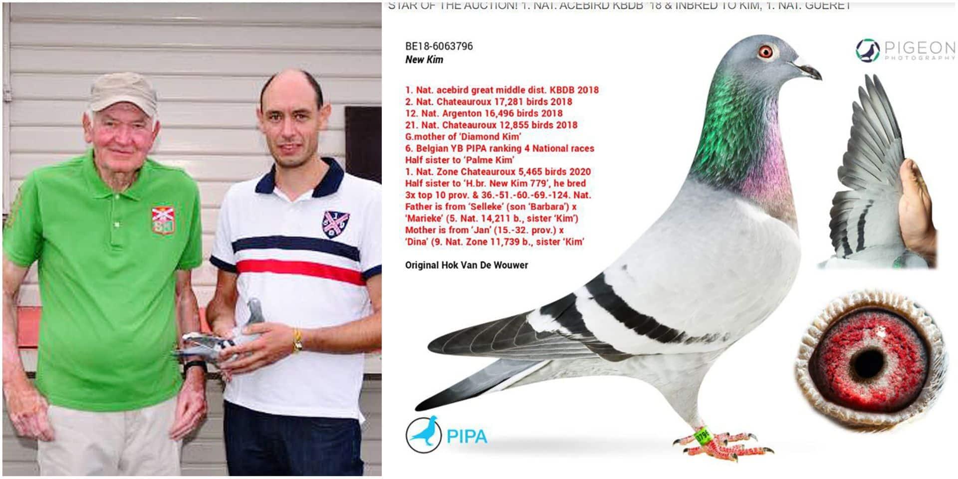 New Kim est le pigeon le plus cher du monde: mis aux enchères à 200 euros, il va être vendu pour au moins 1,3 million d'euros !