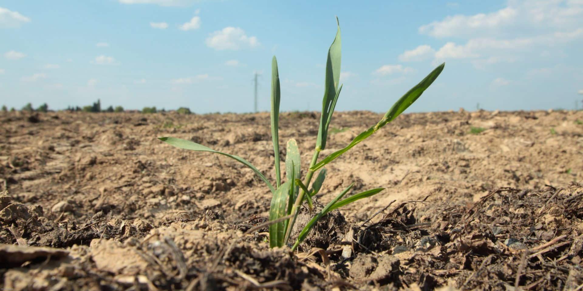 Sécheresse : Certaines provinces wallonnes restent dans des situations extrêmement sèches
