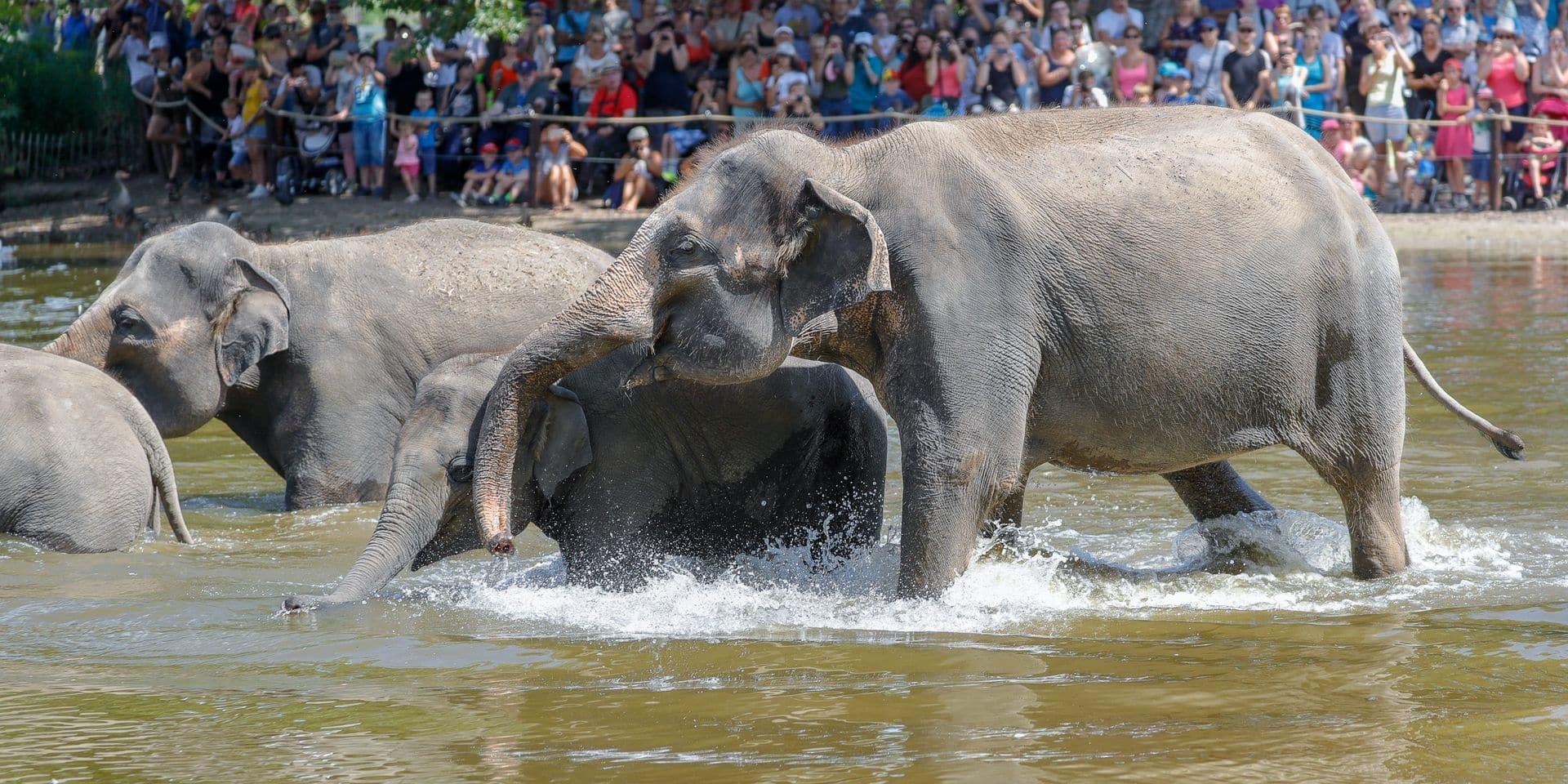 LE BAIN DES ELEPHANTS AU PARC PAIRI DAIZA