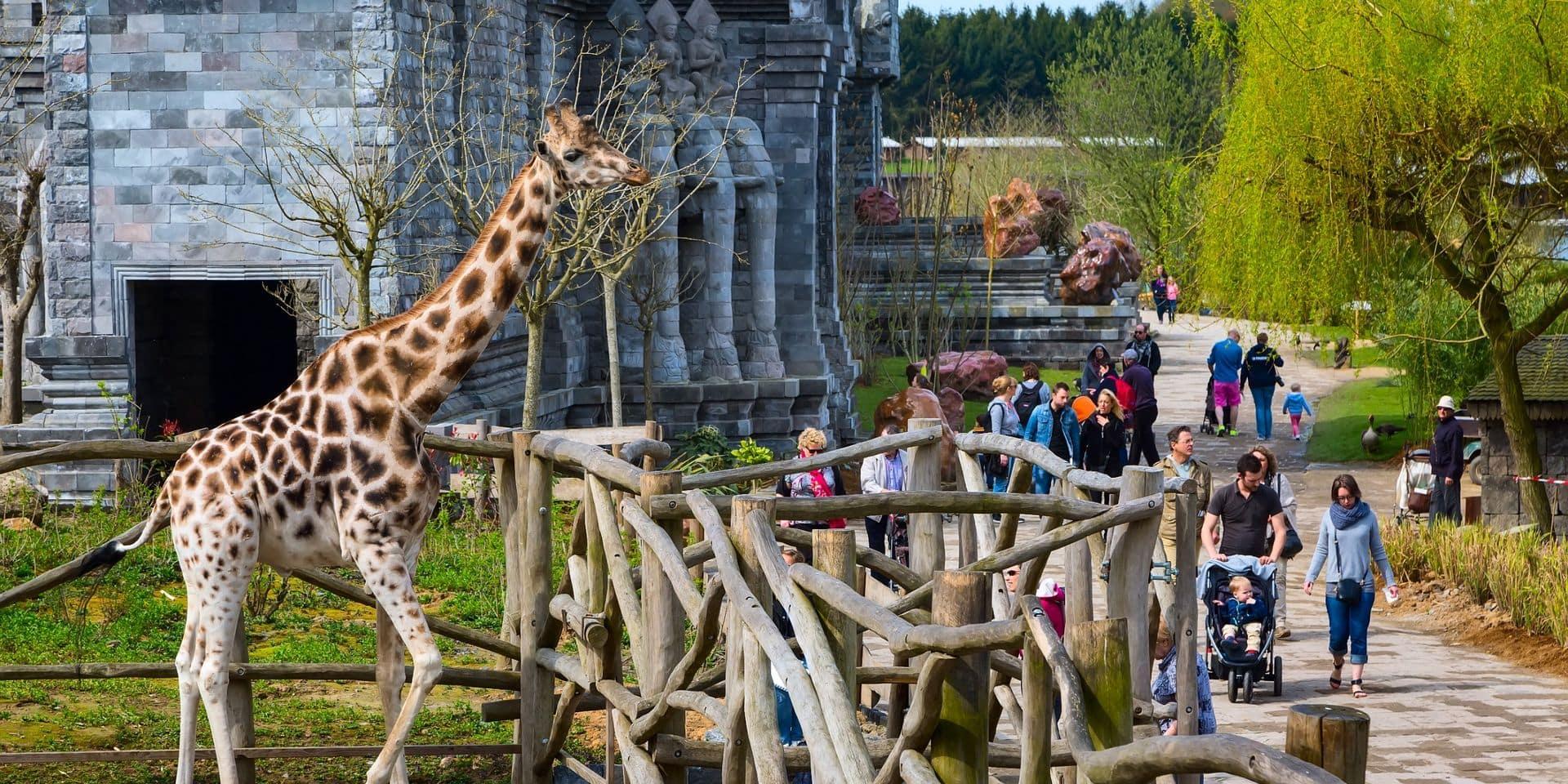 Les parcs animaliers confiants pour leur réouverture prévue ce samedi