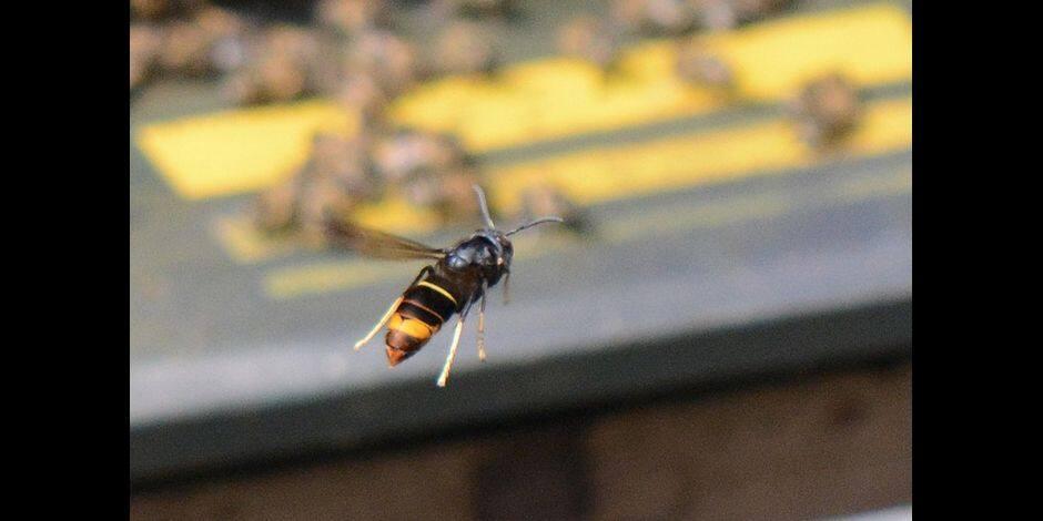 Mouscron: un appel à la vigilance pour les apiculteurs