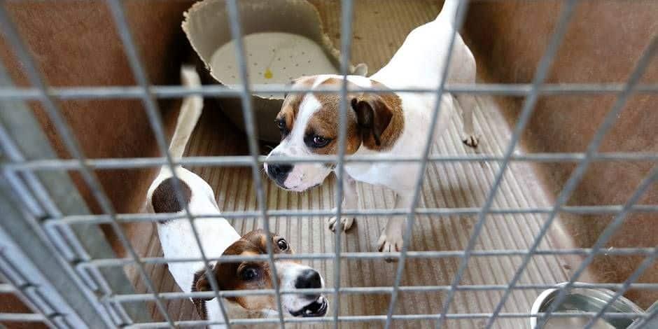 Bien-être animal : Le cri du cœur du refuge Veeweyde
