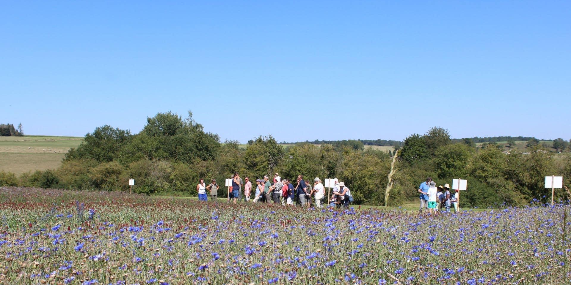 Plan Bee : semons des fleurs pour des sucres d'abeilles