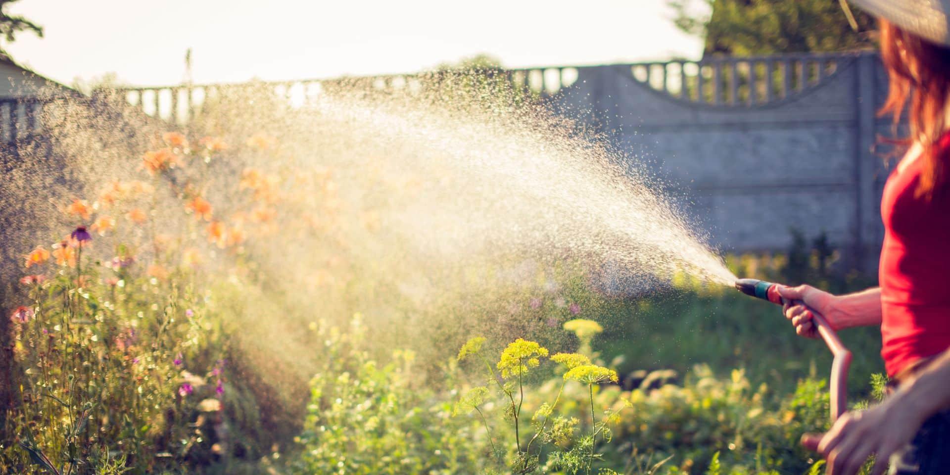 Nos jardins souffrent après la canicule : les bons gestes à adopter