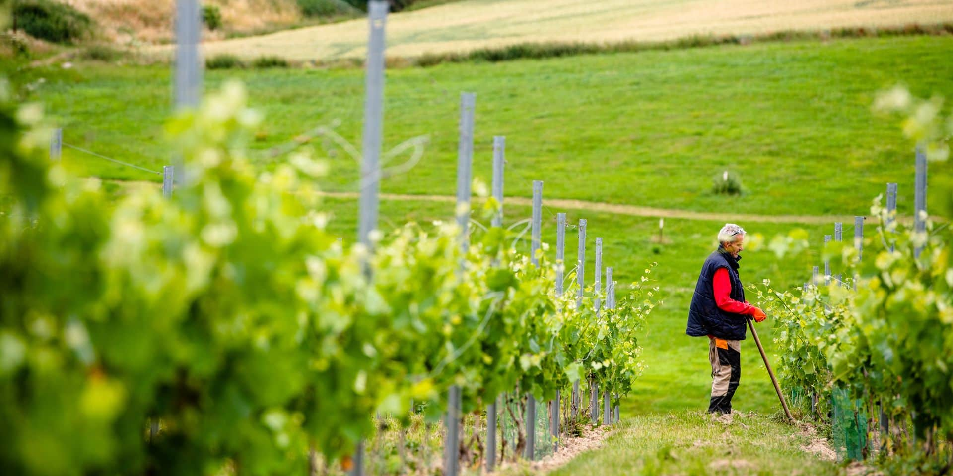 Ame des vins wallons - Namur: ASBL VignAndenne - Michel d'Harveng - vignoble - vigneron - raisin - vin wallon