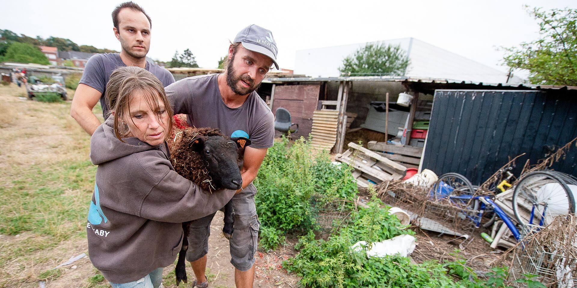 Lessines: un plan d'actions en faveur du bien-être animal