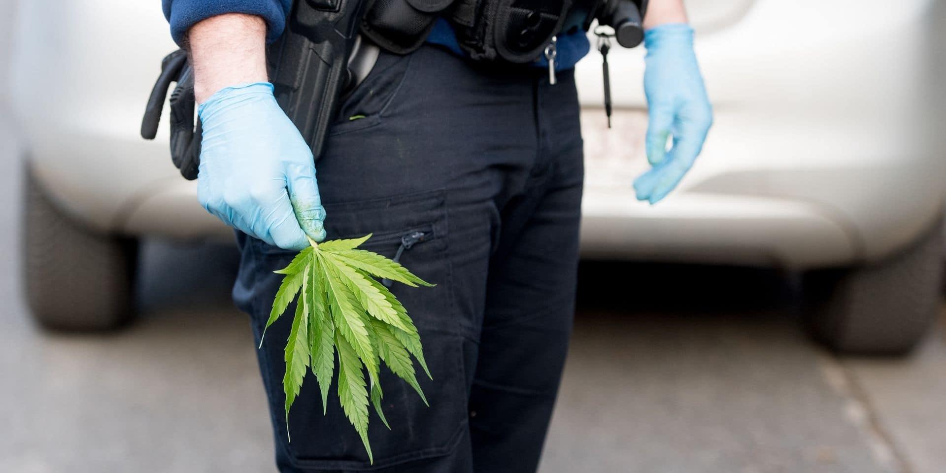 Lessines: de nombreux plants de cannabis retrouvés après une perquisition dans un ancien restaurant chinois