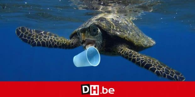 Hawksbill sea turtle (Eretmochelys imbricata) trying to bite a plastic cup. Composite image. Portugal Reporters / Photoshot