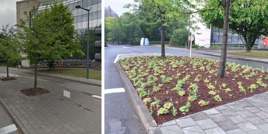 Les projets de Bruxelles Mobilité pour moins de béton et plus de verdure à Bruxelles
