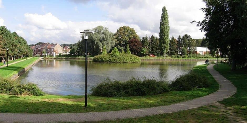 Braine-le-Comte: les arbres de l'étang Martel vont être abattus et replantés