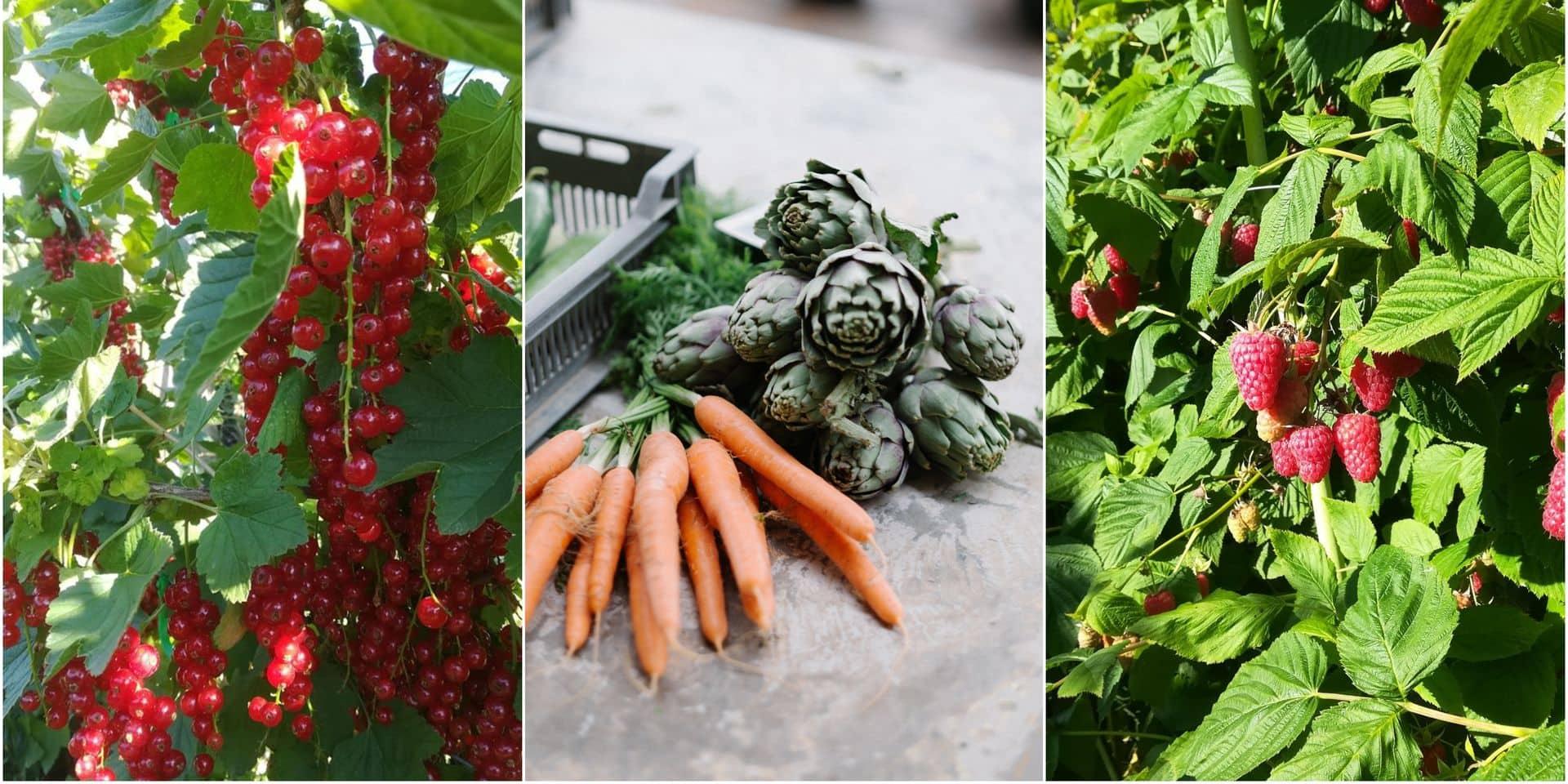 Ces endroits où l'on cueille ses légumes et ses fruits soi-même