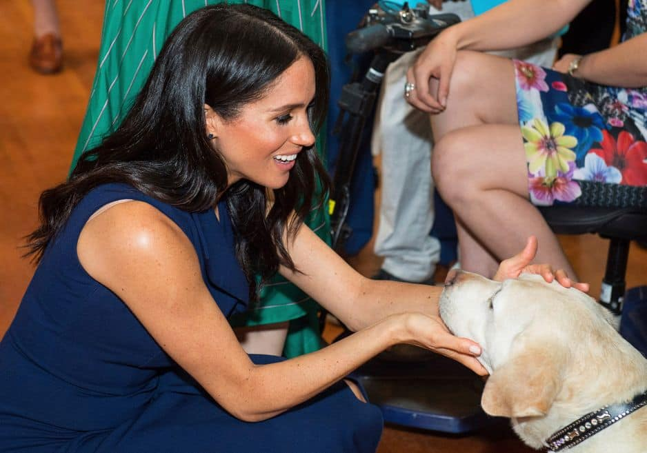 ... Et Meghan un chien guide !