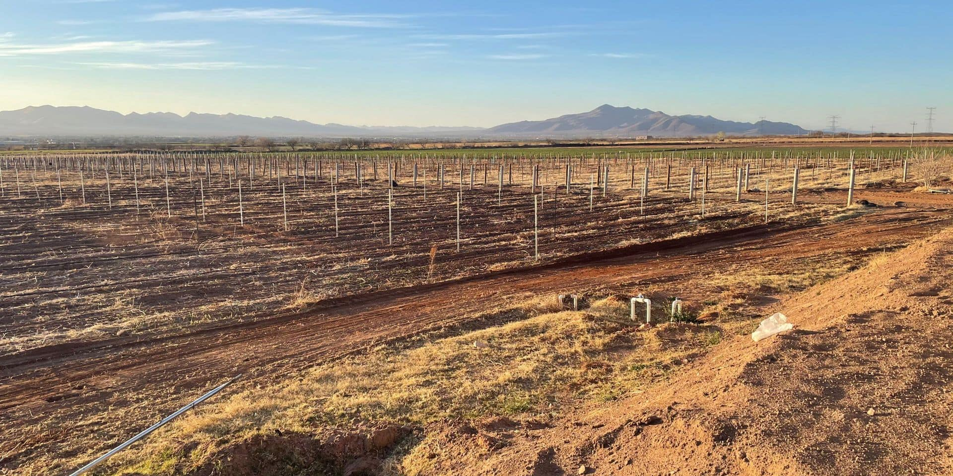 Chihuahua n'est pas qu'un désert: cet Etat mexicain est une terre promise à un bel avenir viticole