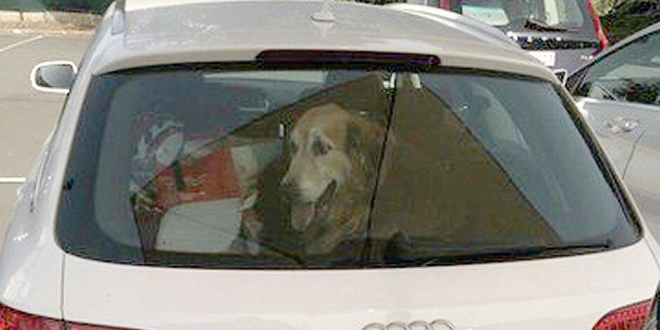 """Un chien abandonné dans une voiture en plein soleil: """"J'ai proposé à son propriétaire de l'enfermer à sa place !"""""""