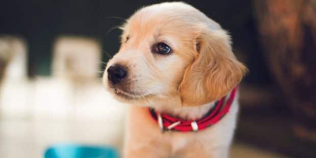 Le carnet d'adresses pour chouchouter et s'occuper de son chien - La DH