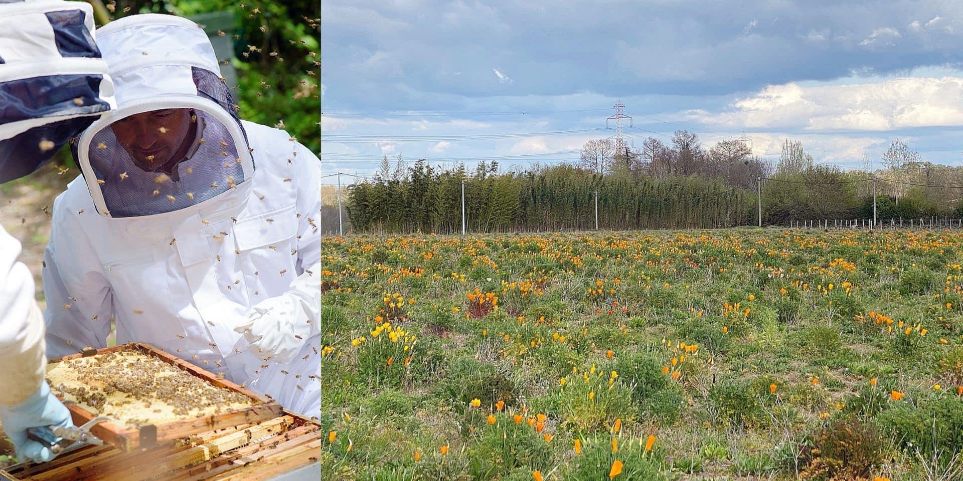 Réinventer Bordeaux : vignerons et vigneronnes se tournent vers l'agroécologie