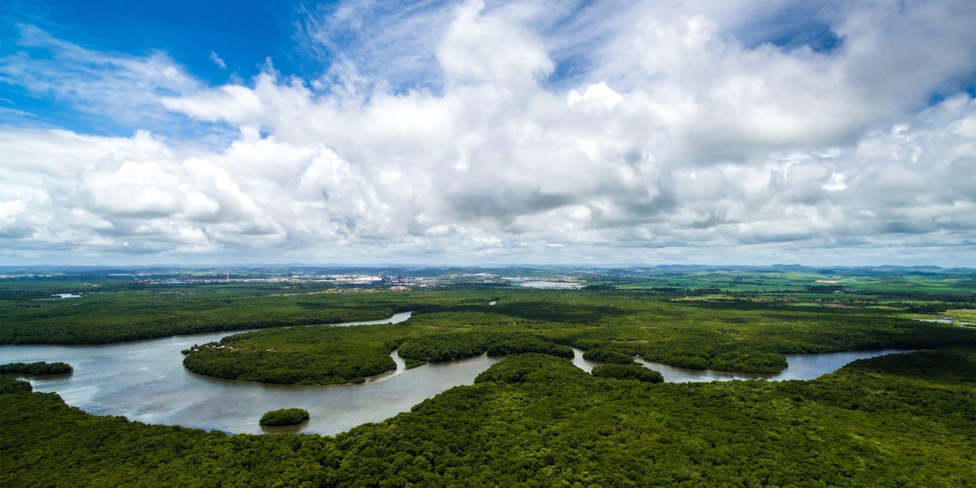 La forêt amazonienne en train de devenir source de CO2, selon une étude