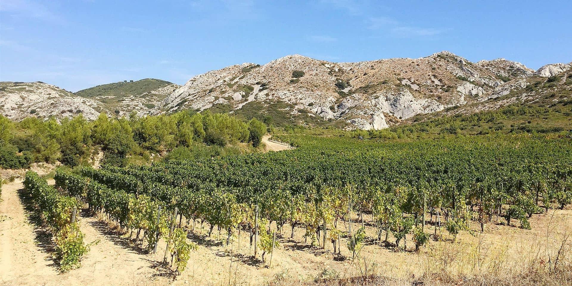 L'AOP Baux-de-Provence fête ses 25 ans : présentation des 10 vignerons qui représenteront la seule AOP 100% bio de France