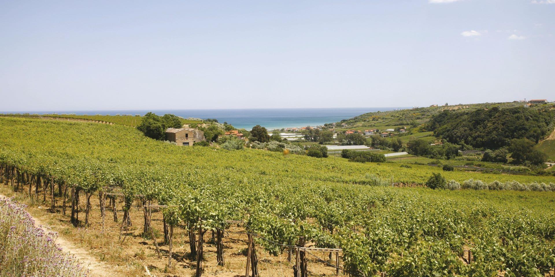 La Cantina Tollo lance une gamme de vins bio et vegan qui sent bon le sud
