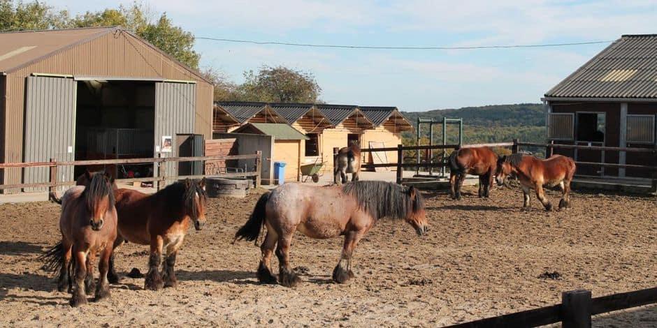 """Simple déclaration de culpabilité pour un ancien bénévole de """"100 chevaux sur l'herbe"""" à Couvin"""