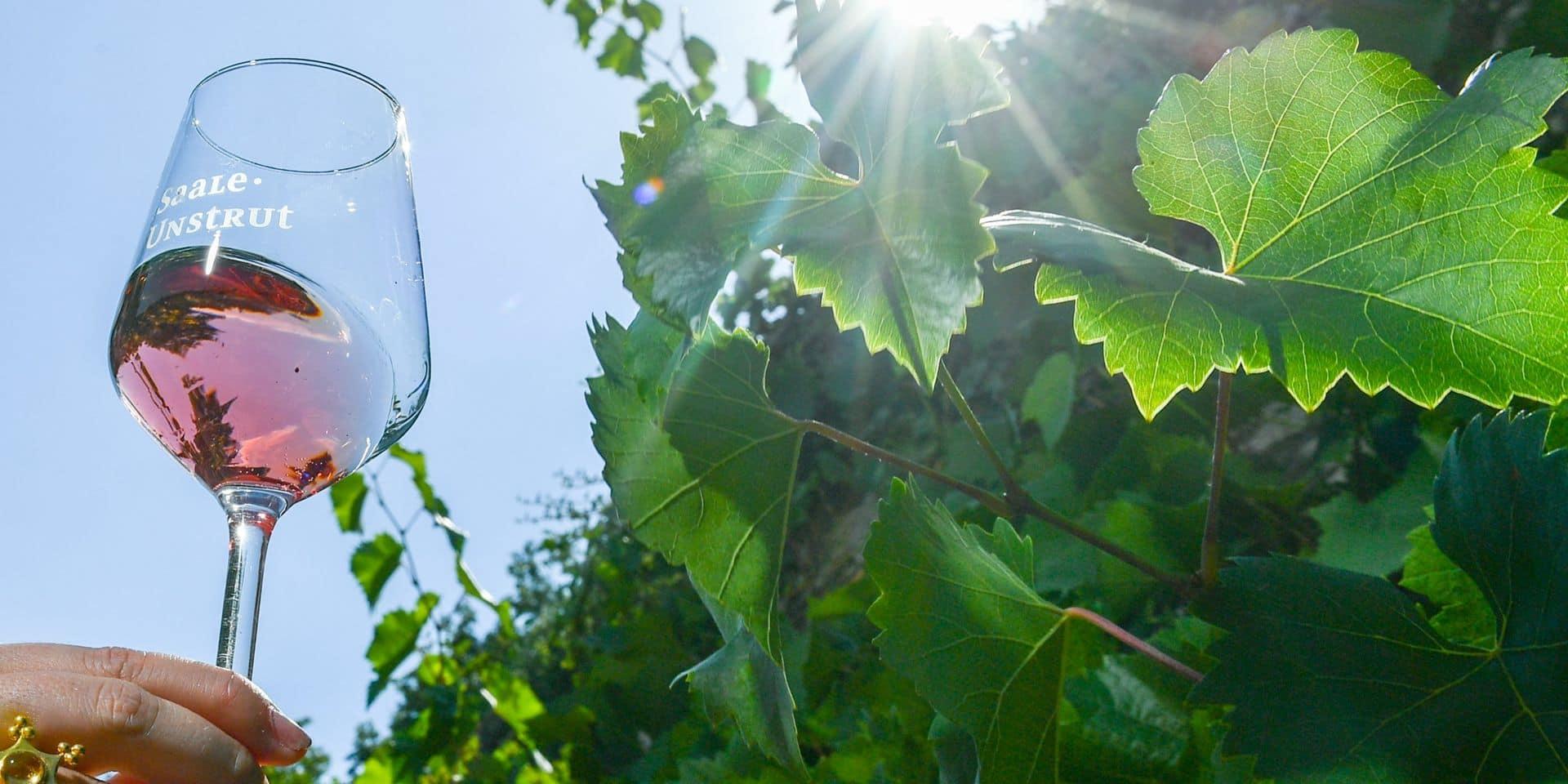 20 bons plans dénichés dans les foires aux vins