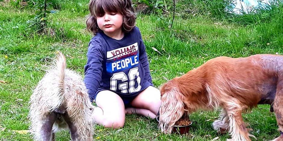 La ville de Namur donne des conseils pour vos animaux en période caniculaire