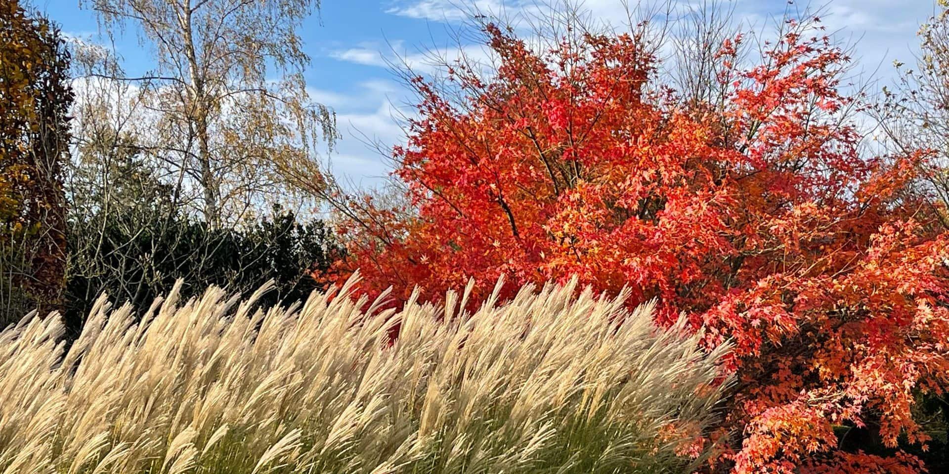 La magie des contrastes dans votre jardin
